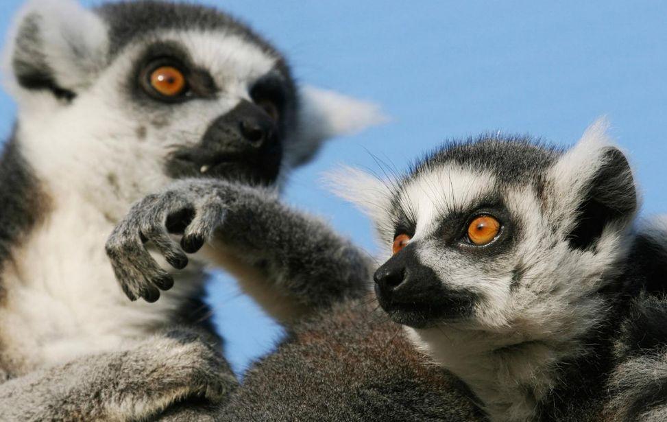 One World Trips - Classic - Africa - Madagascar