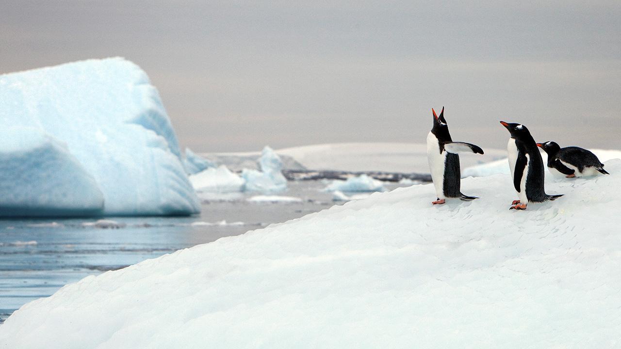 One World Trips - Destinations - Polar Regions - Antarctica
