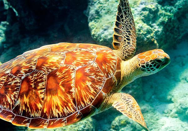 One World Trips - Marine Tours - Sailing - Maldives