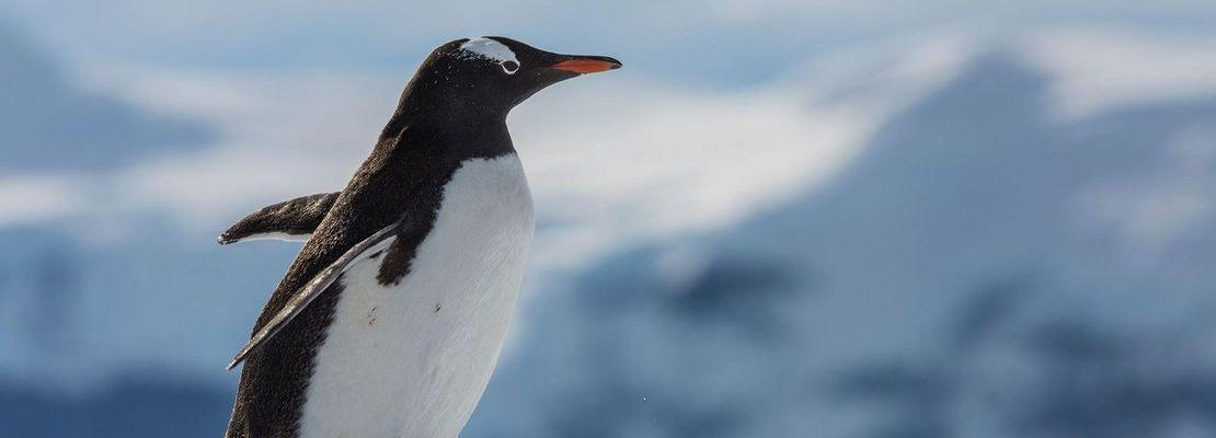 One World Trips - Falklands, South Georgia & Antarctica
